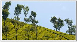 Ooty car rental for kodaikanal sight seeing