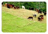 Ooty Car Rental For Mattupedi Dairy Farm