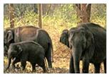 Ooty Car Rental For Mudumalai Wildlife Sanctuary